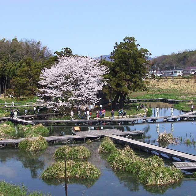 中井町厳島湿生公園